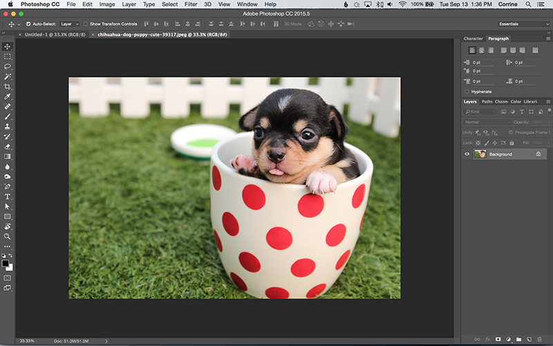 How to Turn a Photo into a Vector Line Art with Illustrator